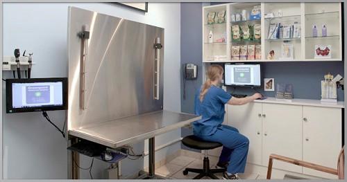 Greenpoint-Veterinary-Hospital_Exam-Room_500