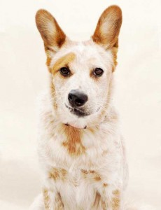 Dog Portraits Greenpoint Nicolas Maloof