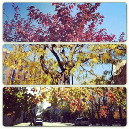 fall color greenpoint