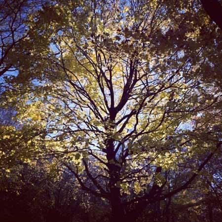 fall tree greenpoint