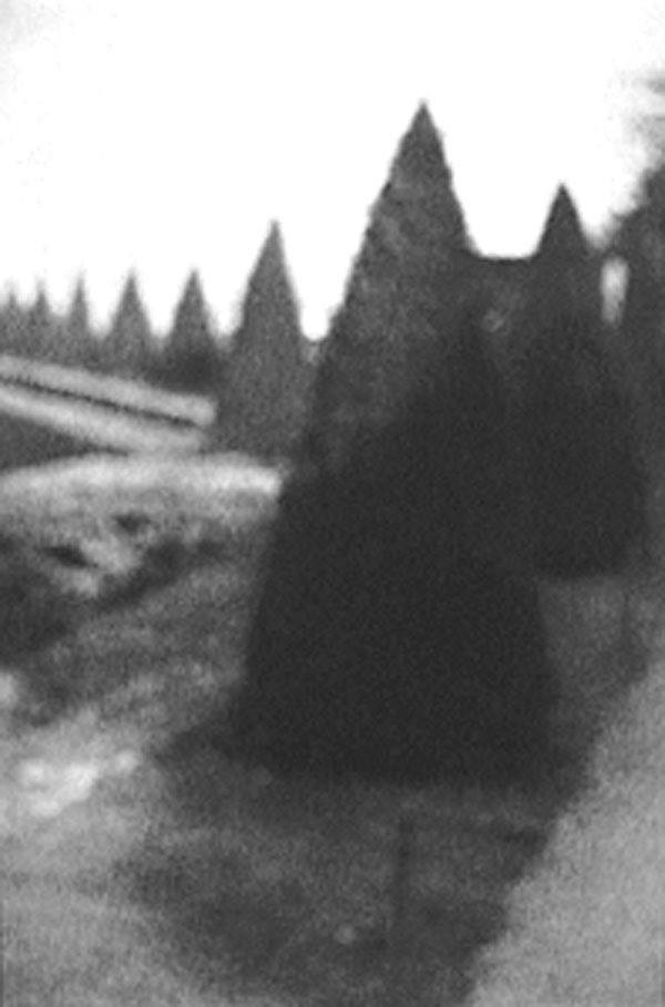 """""""Pointed Bushes, Versailles, 1993"""""""