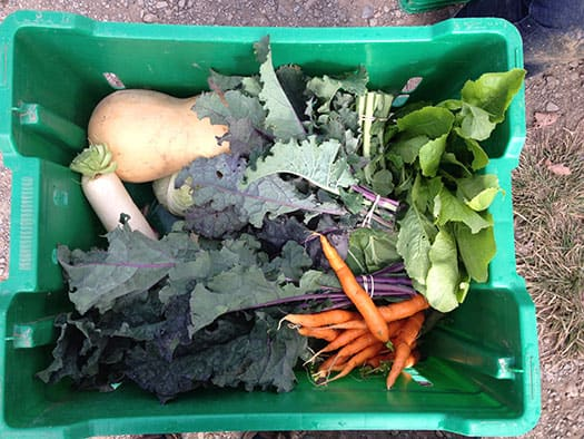 Box_of_Veggies_LinageFarms