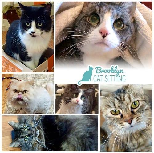 Brooklyn-Cat-Sitting_Image-1_500