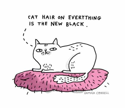 Brooklyn-Cat-Sitting_Image-3