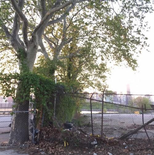 Old London Plane Trees hang over GPL Property Photo Credit: Darren Lipman