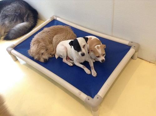 Happy-Dogs_Image_500