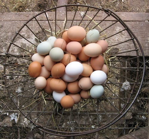 Down-To-Earth-Markets_Eggs-in-Basket_500