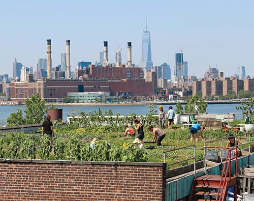 Eagle Street Rooftop Farm in Greenpoint