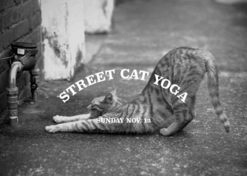 street cat yoga