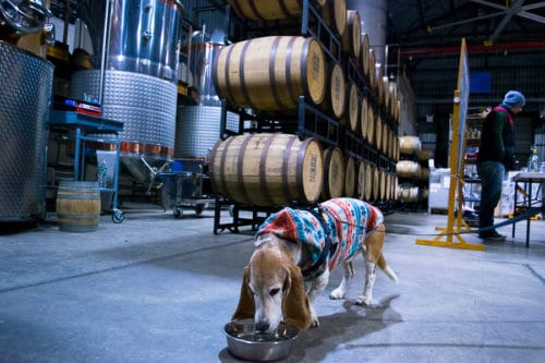 Dogs are welcome at the New York Distilling Company on Dog Day Sundays from 2-6pm