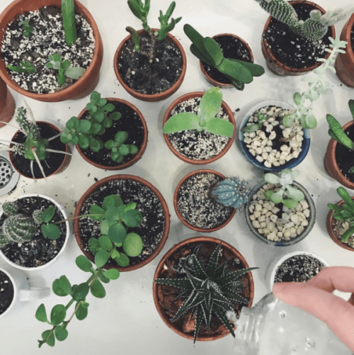 plants via @tinybloom Instagram