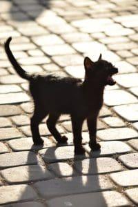 stray black kitten