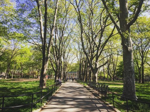 McGolrick Park, photo by Megan Penmann