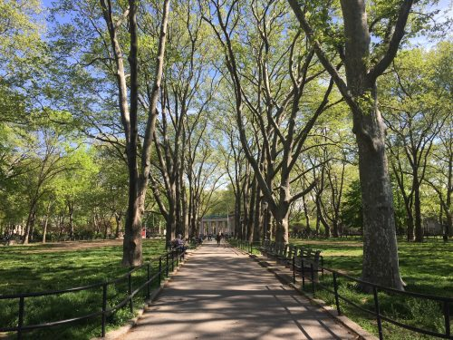 McGolrick Park. Photo: Megan Penmann