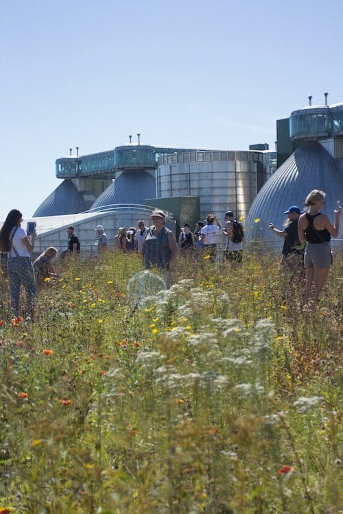 On the green roof at the 2nd Annual Kingsland Wildflower Festival. Photo by Kate Truisi