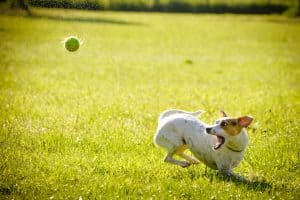 Dog Walking & Pet Sitting-A Job for Your Lifestyle