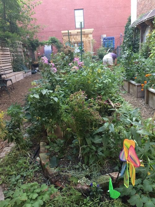 61 Franklin Street Community Garden. Photo by Lucie Levine