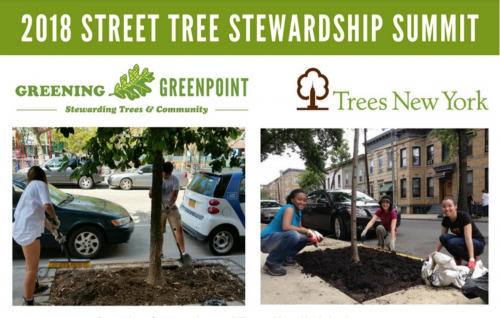 Greening Greenpoint Tree Stewardship