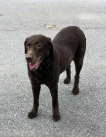 found dog greenpoint