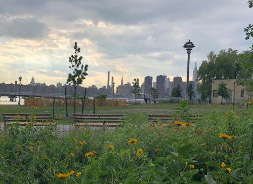 Wildflowers in Transmitter Park. Photo: Megan Penmann